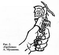 Рис. 2. «Гребенка» А. Муханова