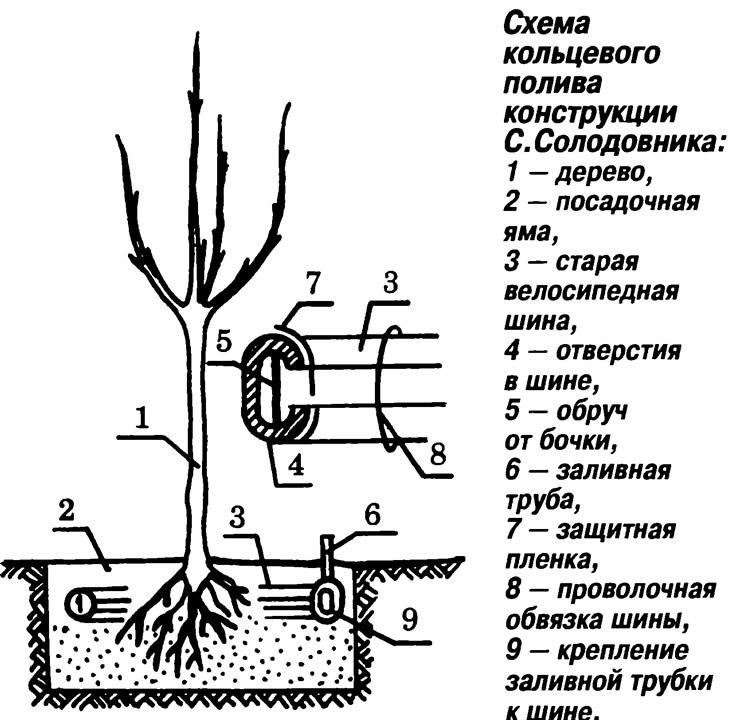 Схема кольцевого полива
