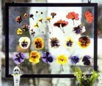 Спрессованные цветы