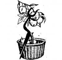«Вилы» для яблок